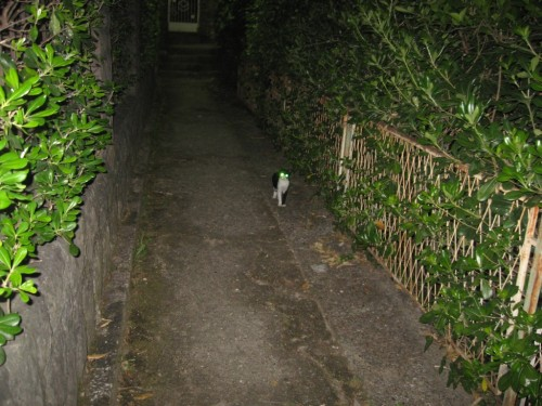 Котик в переулке старой Будвы