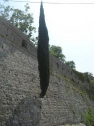 Дерево, растущее в стене