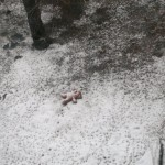 медвежонка выбросили из окна в снег