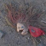 кукольный апокалипсис 2017-06-17