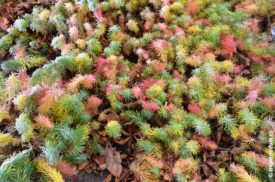 Иней на цветной траве в палисаднике