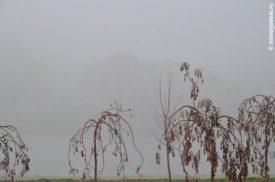 Молодые деревья в тумане, Левобережье