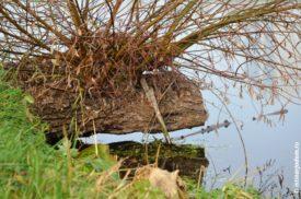 Пенёк над речной водой