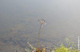 Травинка в тумане торчит из воды