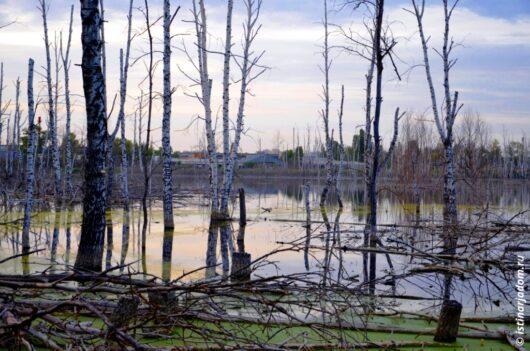 болото на окраине Белгорода