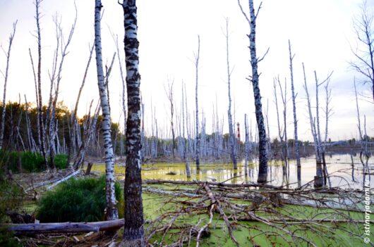 заболоченное метеоритное озеро Белгород