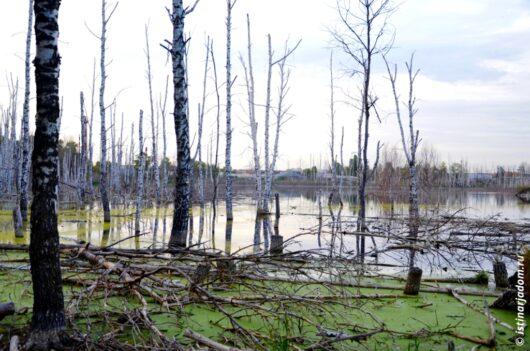 заболоченное озеро сухой березняк