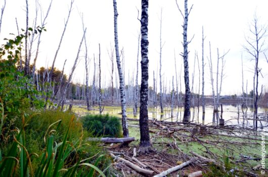 метеоритное озеро недалеко от ул. Волчанской