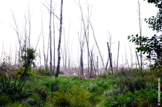 трава болото ЖБК сухие березы